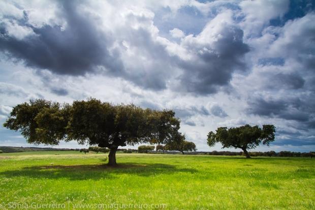 PhotoTourAlqueva_20120413_0012